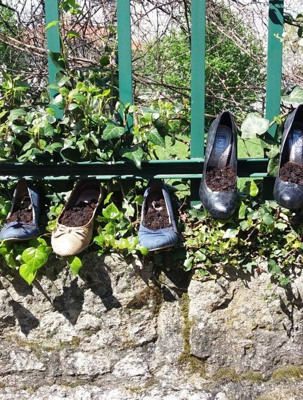 Sementeiras em Calçado Velho
